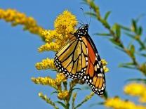 butterfly-599493_960_720